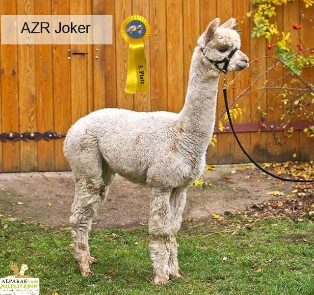 AZR Joker (Appaloosa)
